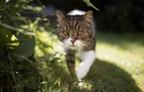 Picture cat, look, walk