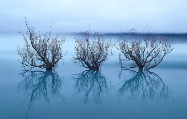 Picture reflection, trees, nature, lake