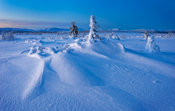 Picture winter, snow, trees, the snow, Sweden, Sweden, Lapland, Lapland, Gitsfjallets nature reserve