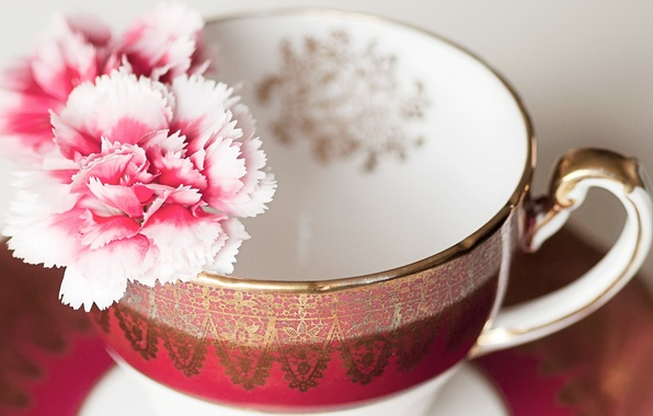 Picture flowers, Cup, pink, clove