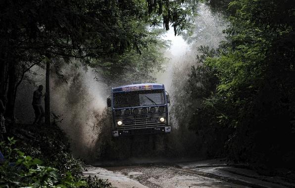 Picture greens, water, trees, squirt, puddle, truck, rally, KAMAZ, kamaz, Paris-Dakar, KAMAZ-master