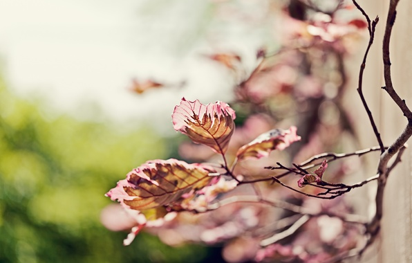 Picture leaves, nature, sprig, focus, branch, blur, bokeh