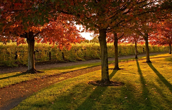 Picture leaves, trees, Park, Autumn, day, track, the bushes, solar