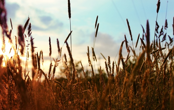 Picture the sun, nature, background, widescreen, Wallpaper, plant, wallpaper, widescreen, background, full screen, HD wallpapers, widescreen, …