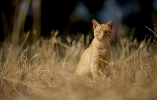 Picture cat, cat, look, red