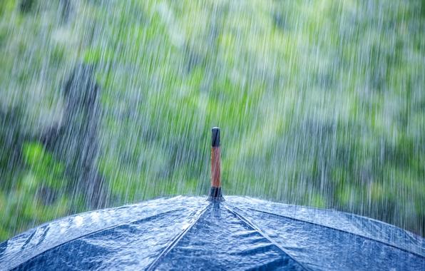 Picture macro, umbrella, rain, the shower