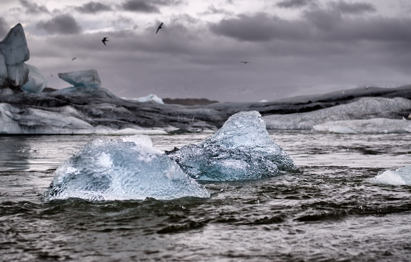 Picture sea, storm, seagulls, iceberg, ice