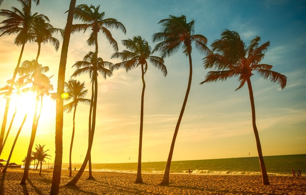 Picture sand, sea, beach, summer, the sky, the sun, joy, nature, palm trees, people, mood, the …