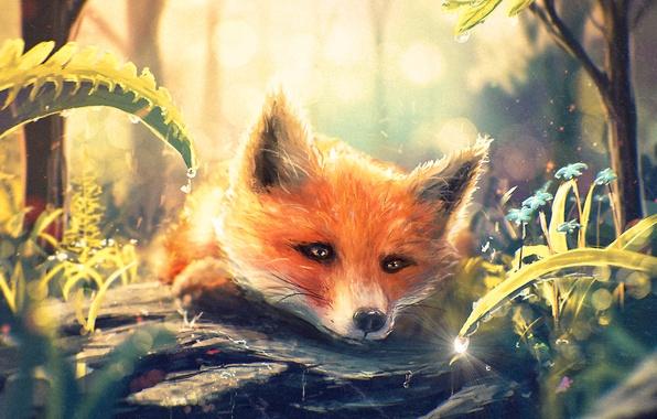Picture forest, grass, drop, art, muzzle, Fox, Fox, fox