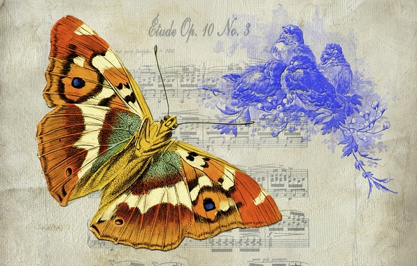 Picture background, butterfly, texture