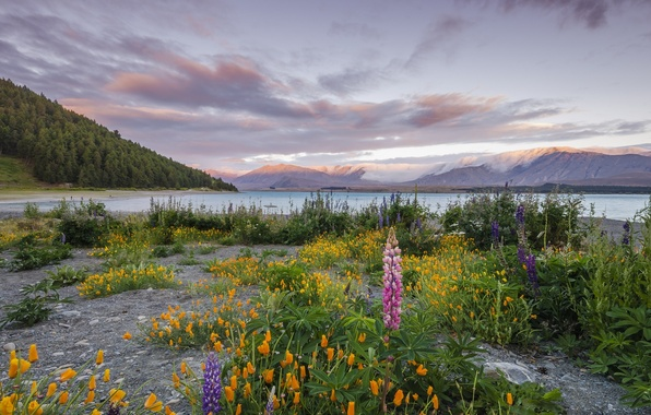 Picture the sky, grass, clouds, flowers, mountains, lake