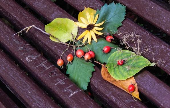 Wallpaper Flower, Leaves, Flowers, Sheet, Widescreen