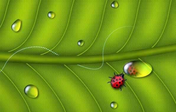 Picture Sheet, Greens, Reflection, Rosa, Mirror, Life, Ladybug