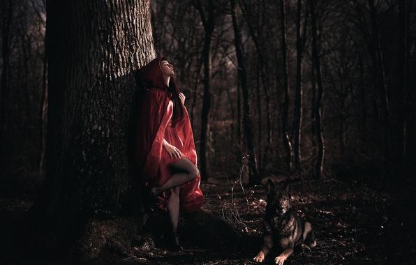 Picture forest, girl, dog, cloak, Arya, Laurent KC