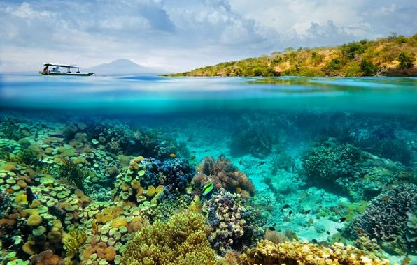 Picture sea, fish, boat, corals, the bottom of the sea