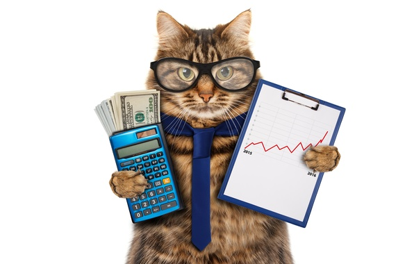 Picture cat, money, humor, glasses, tie, white background, dollars, schedule, the bucks, calculator, accountant