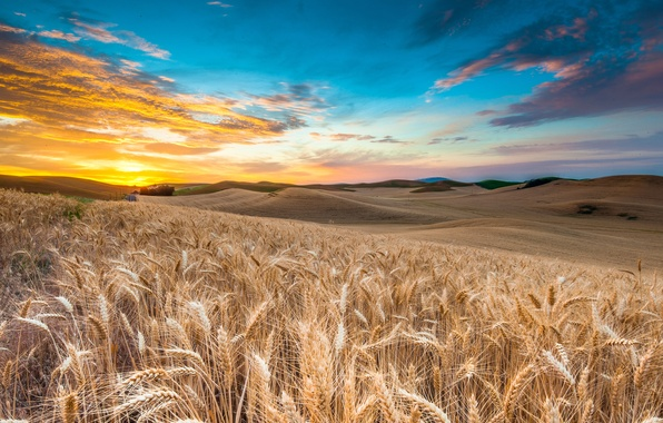 Picture the sky, clouds, sunset, rye, spikelets, The slopes