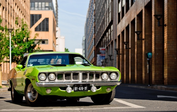 Picture green, green, 1971, Barracuda, Plymouth, Plymouth