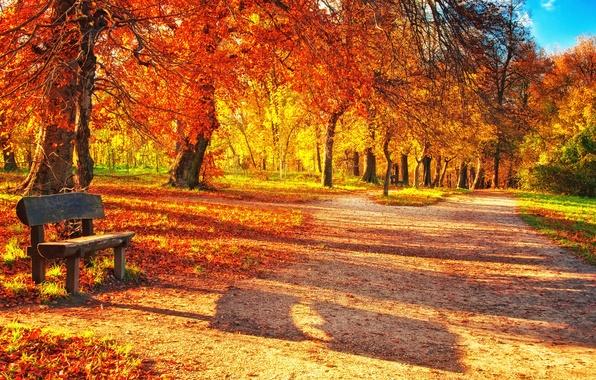 Picture autumn, forest, leaves, bench, Park, park, autumn, leaves