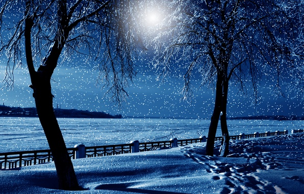 Picture winter, snow, trees, nature, nature, night, winter, snow, tree