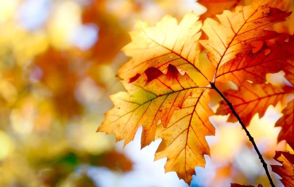 Picture autumn, leaves, nature, paint, colors, nature, autumn, leaves, bokeh, bokeh, 2560x1600