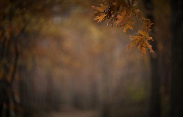 Picture autumn, leaves, Park, branch, blur, alley