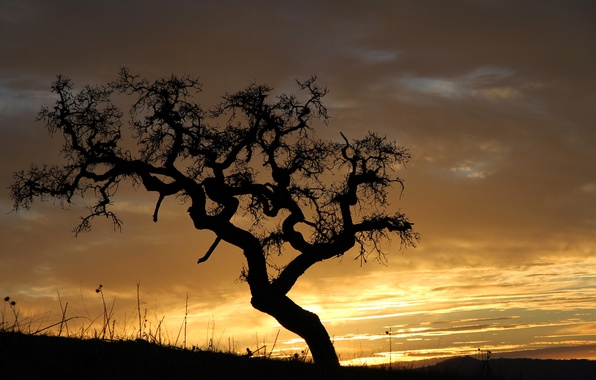 Photo wallpaper the sky, clouds, tree, the evening, silhouette, glow