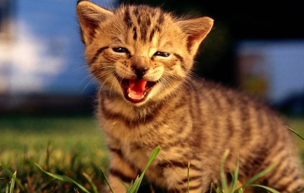 Picture nature, smile, kitty