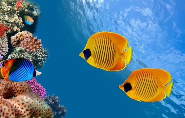 Picture sea, ocean, nature, water, animal, fish, starfish, reef, America, sugoi, subarashii, coral, tourism, Costa Rica, …