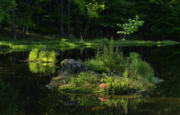 Picture forest, grass, flowers, lake, reflection, island, tree