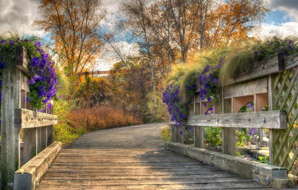 Picture flowers, bridge, nature