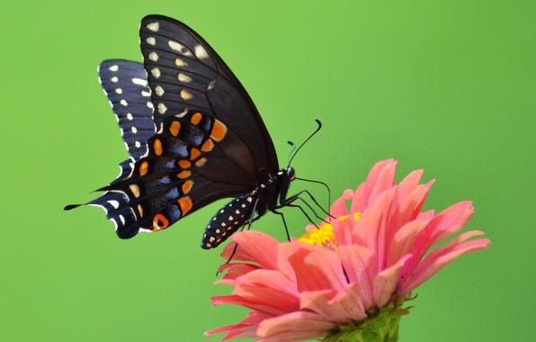 Picture flower, green, butterfly, wings, petals, green, antennae, flower, wings, butterfly, petals, proboscis, antennae, open wings, …