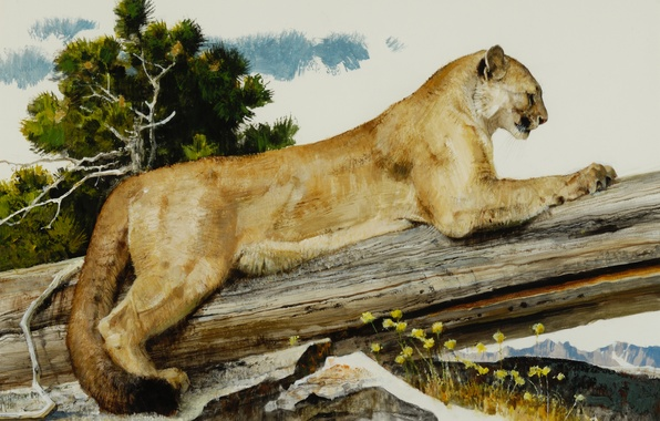 Picture cat, trees, stones, animal, picture, art, claws, log, Puma, wild, Bob Kuhn