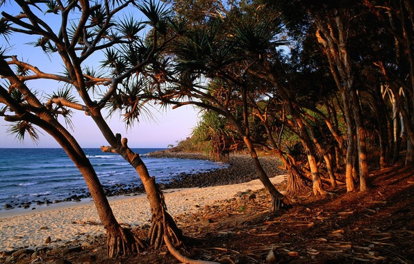 Picture Sea, Beach, Trees, Stones, Roots
