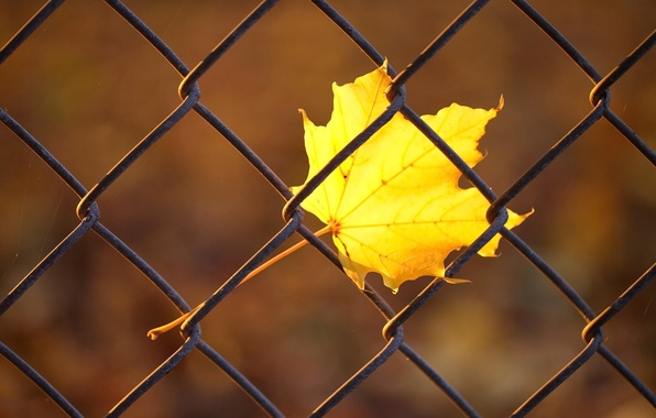 Picture autumn, macro, yellow, sheet, mesh, the fence, rods