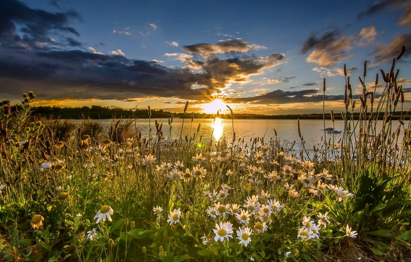 Picture sunset, flowers, lake, England, chamomile, England, reserve, West Yorkshire, West Yorkshire, St Aidan's RSPB