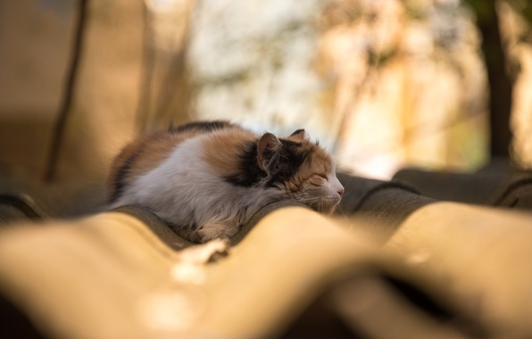 Picture roof, cat, tree, branch, sleep, shadow, bokeh, sunlight, lazy