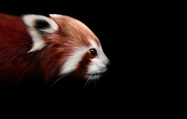 Picture background, black, art, firefox, Red Panda