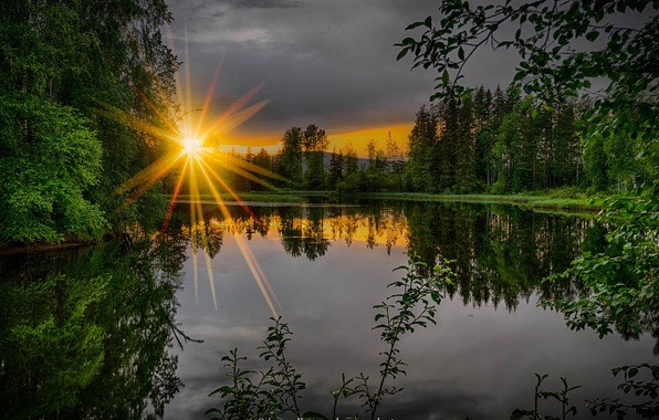 Picture greens, forest, summer, trees, sunset, branches, river, the evening, the rays of the sun