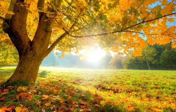 Picture autumn, forest, grass, leaves, the sun, trees, glade