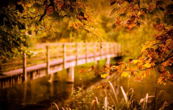 Picture autumn, bridge, river