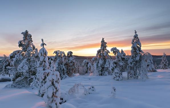 Picture winter, snow, trees, the snow, Sweden, Sweden, Overtornea, Övertorneå