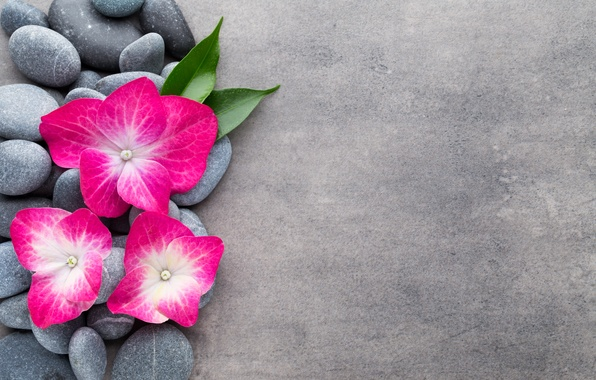 Wallpaper Flowers, Stones, Flower, Orchid, Stones, Spa