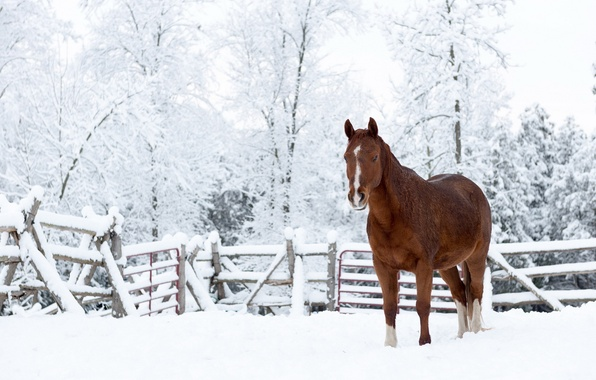 Picture snow, nature, horse