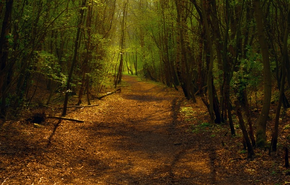 Picture forest, light, trees, the way, foliage, trail, turn, track, shadow., mixed forest