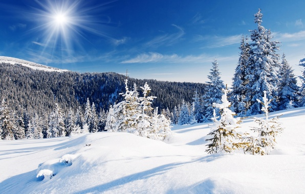 Picture winter, forest, the sky, snow, trees, blue, the snow, the rays of the sun