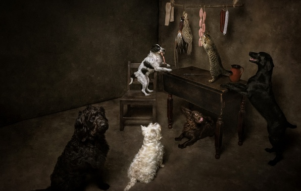 Picture cat, dogs, food