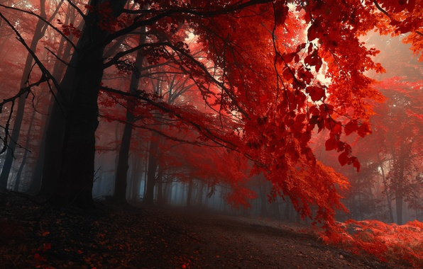 Picture autumn, forest, leaves, trees, fog, the evening, the crimson