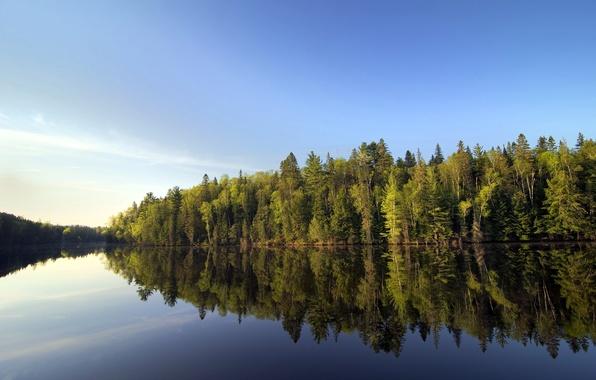 Picture forest, landscape, nature, river