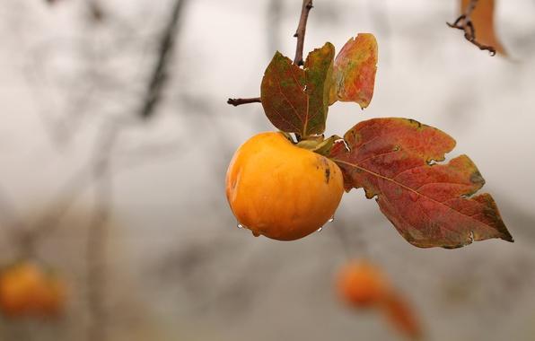 Photo wallpaper autumn, branch, Apple